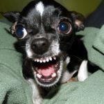 В Смоленской области ищут хозяйку собаки, которая покусала ребенка