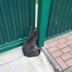 Смолянка спасла кота, застрявшего в воротах