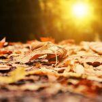 Прогноз погоды на понедельник, 1 октября