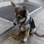 Воспитанникам детского дома запретили оставлять щенка