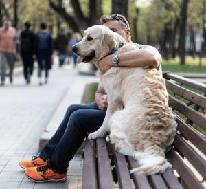 В России появился список штрафов для владельцев собак