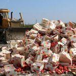 В Смоленской области уничтожили мандарины и грибы неизвестного происхождения