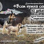В Смоленске проведут благотворительную акцию в помощь бездомным животным