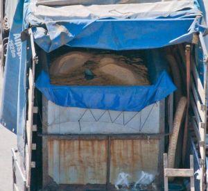 В Иванове возмутились условиями перевозки дельфинов из Смоленска