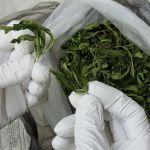 В Смоленской области у мужчины изъяли 500 граммов «травки»