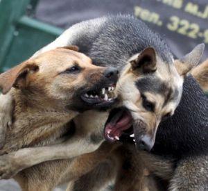 Бродячие собаки все чаще нападают на детей