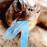 Депутаты предлагают запретить использование пластиковых пакетов