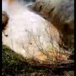 В Смоленской области в реку сливают странную жидкость (видео)