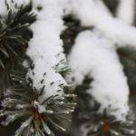 Прогноз погоды на понедельник, 14 января