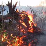 Крупный лесной пожар сняли на видео