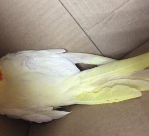 Бессовестные люди украли раненого попугая (фото)