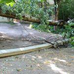 Упавшее дерево обесточило целый дом (фото, видео)