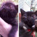 Смолянка спасла от неадекватного живодёра котят