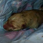 Бездушные люди завернули новорожденного щенка в пакет и выбросили на помойку (фото)