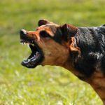 Следователи проверят информацию о нападении собаки на трёхлетнюю девочку