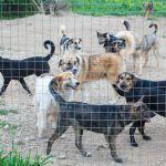 Смоленский приют для собак вновь просит о помощи