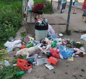 На остановке Красный Бор в стихийной свалке нашли мертвую собаку