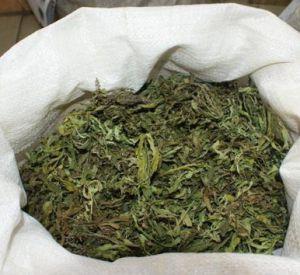 У жителей Смоленской области изъяли полкило наркотиков