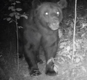Фотоловушка запечатлела посетителей звериной тропы (видео)