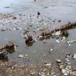 Специалисты выясняют причины массового мора рыбы в Каспле