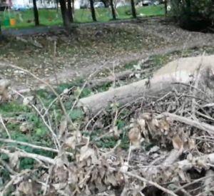 На территории детской площадки обосновались крысы (видео)