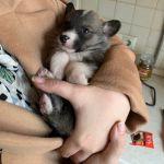 В Смоленской области новорожденного щенка выкинули на помойку