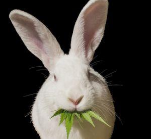 """""""Белый кролик"""". Мошенники придумали новую схему кражи денег с банковских карт"""