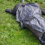 В Смоленской области нашли растерзанный труп мужчины