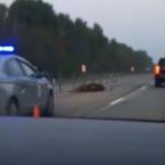 В Смоленской области в ДТП с животным опрокинулось авто (видео)