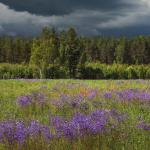 Прогноз погоды на пятницу, 3 июля