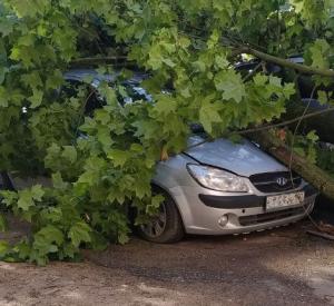 В Смоленске упавшее дерево повредило легковой автомобиль