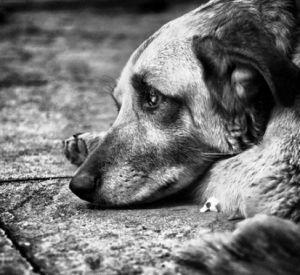 Жительница Смоленского района нашла на помойке собаку с перебитым позвоночником