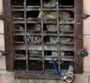 Смолянка просит помочь коту, которого заперли в подвале несколько недель назад