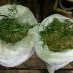 Житель Смоленской области на рабочем месте выращивал «дурь»