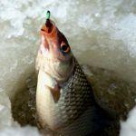 В Смоленской области пройдут соревнования по подледной ловле рыбы