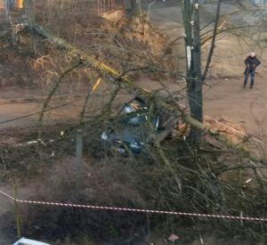 Сильный ветер повалил дерево  на автомобили