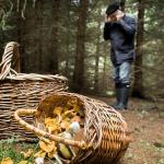 В смоленских лесах заблудился пожилой грибник