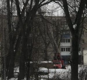Под Смоленском спасли кота, который 5 дней просидел на дереве