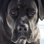 В Смоленской области владельцу собаки, напавшей на ребёнка, вынесли приговор