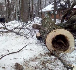 В «Лопатинском саду» устроили массовую вырубку деревьев (фото)