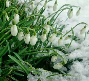 Когда в Смоленскую область придет весна