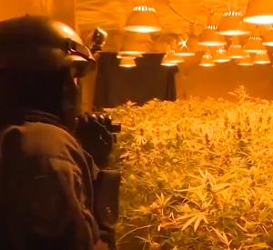 Видео: Приятели создали в заброшенном доме огромную оранжерею с коноплей