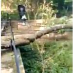 На смоленском кладбище старое дерево сломало ограды (видео)