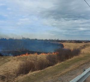 В Смоленской области 25 человек привлекли к ответственности за пал травы