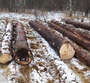 Губернатор Смоленской области потребовал разобраться с незаконной вырубкой леса в регионе