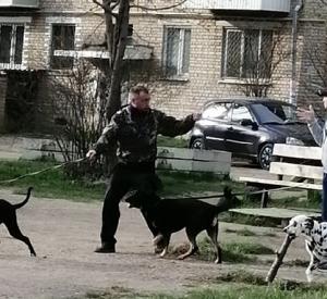 Фото: В Смоленской области собаки напали на женщину с ребёнком