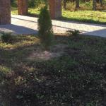Вандалы украли саженцы хвойных деревьев из парка