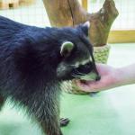 Жителей Смоленска приглашают на экскурсии в зоопарк