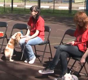 Видео: В областном центре состоялся всероссийский форум по канистерапии