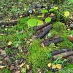 Под Смоленском ФСБ обнаружила крупный схрон боеприпасов (видео)